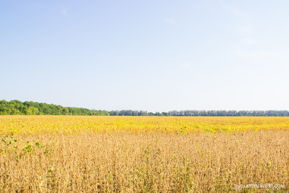 Поля сои сельхозпредприятия «Интерагро Сквыра»