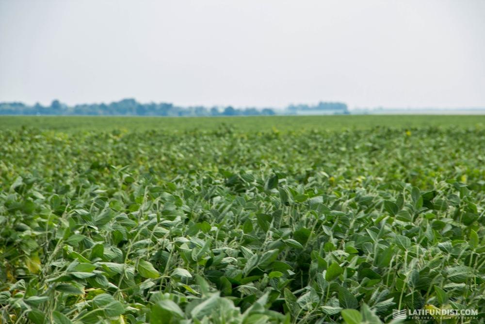 Поле сои «Аграрной технологической компании»