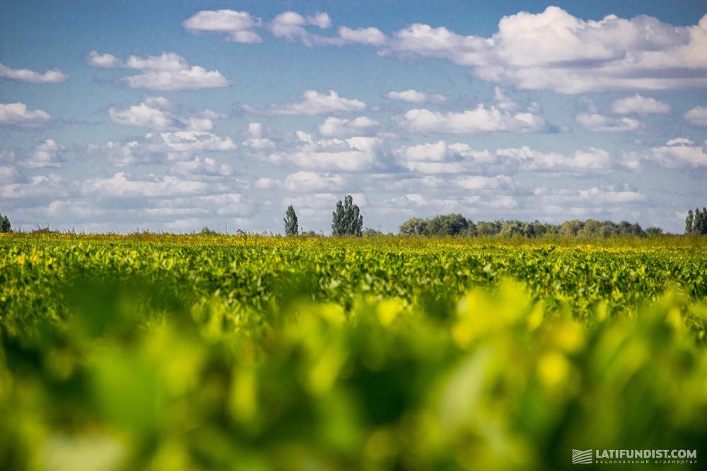 Поля фермерского хозяйства «Лан»