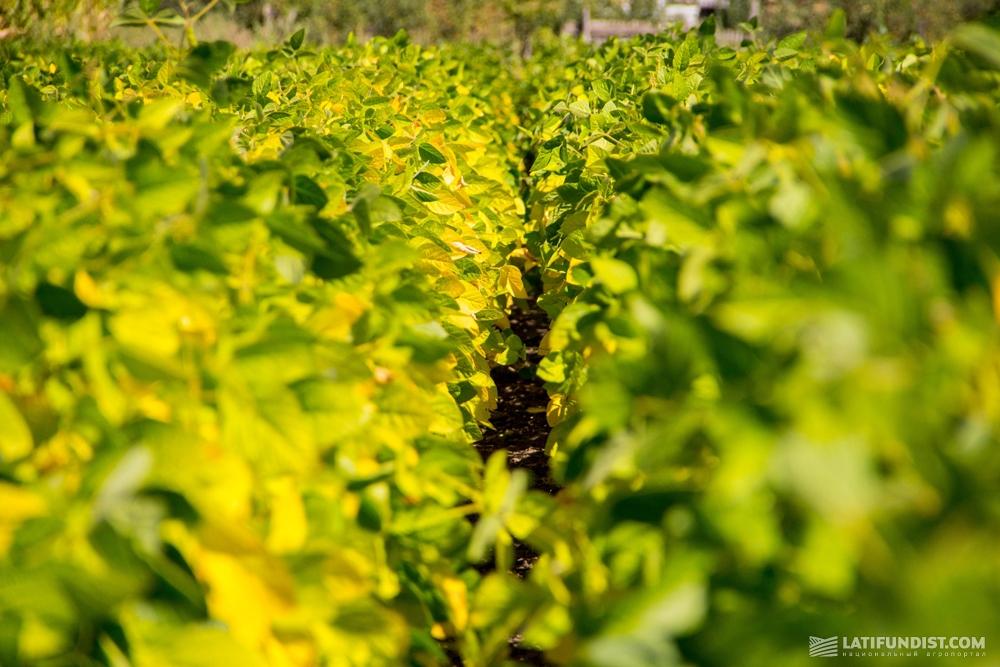 Органическая соя на полях «Сварог Вест Груп»
