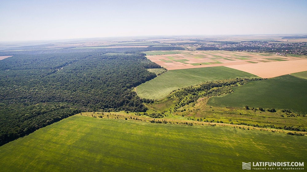 Поля компании «САУТБЕРГ ХОЛДИНГЗ» в Тернопольской области