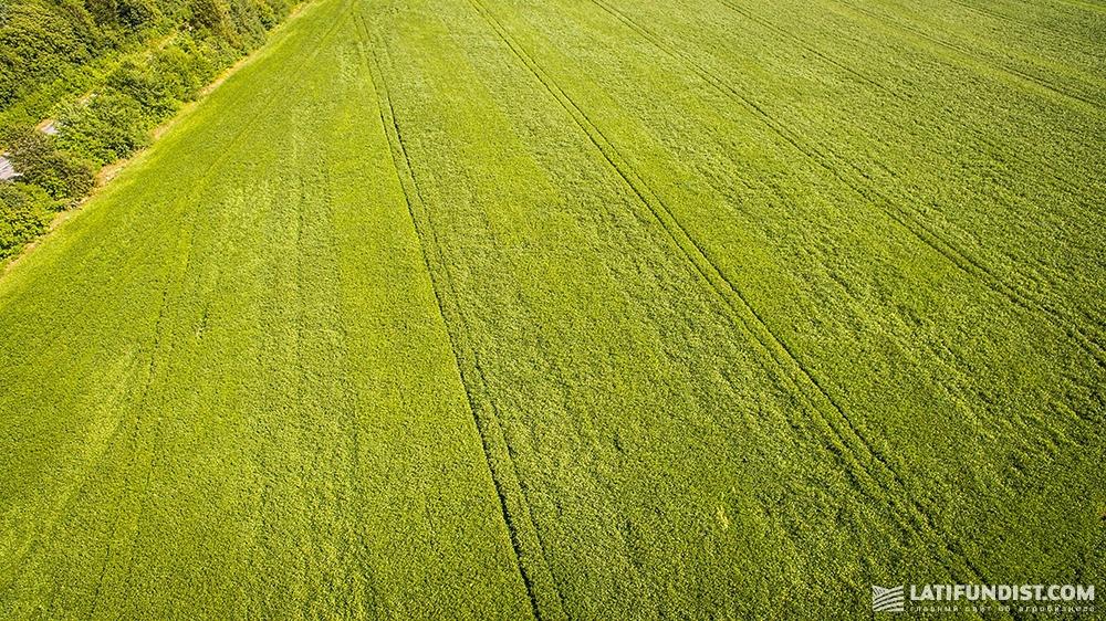 Соевое поле агропредприятия «Энселко Агро» («Кернел»)