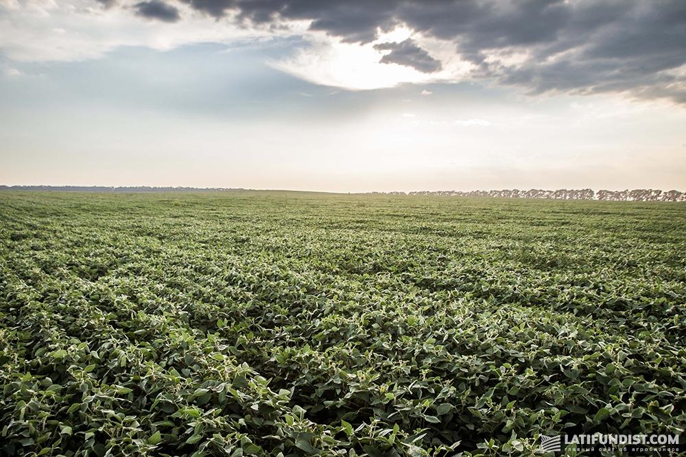 Соевое поле компании «Олимп» (Поле №1)