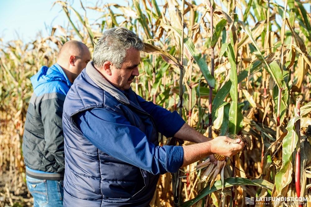 Петр Квашук показывает АгроЭкспедиторам кукурузу