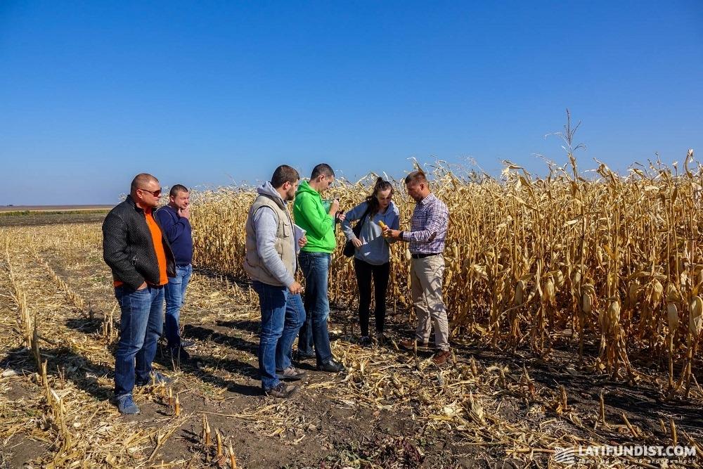 АгроЭкспедиторы осматривают поле
