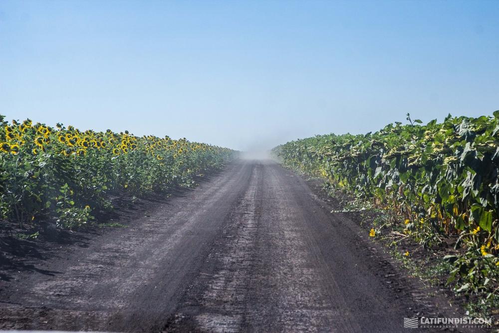 Дорога в подсолнечниках
