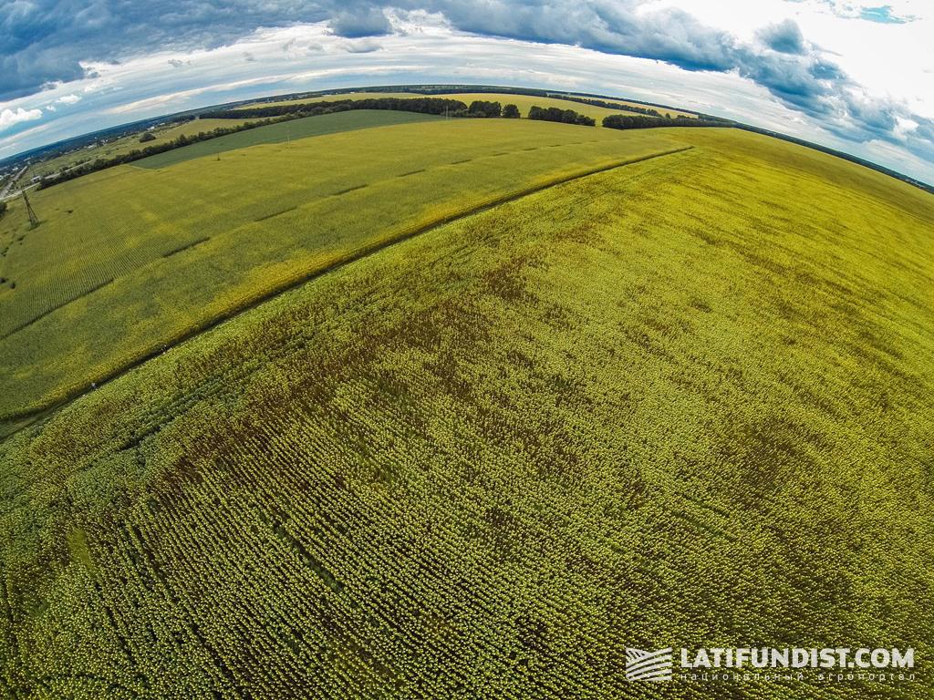 Вид на поле подсолнечника с высоты птичьего полета