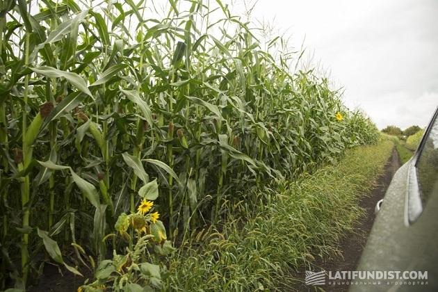 АгроЭкспедиция Кукуруза 2015