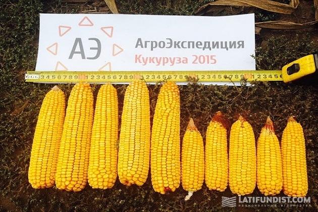АгроЭкспедиция по кукурузе 2015