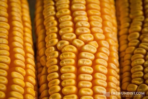 Урожай кукурузы 2015