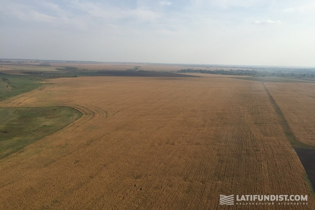 100 м над уровнем кукурузы