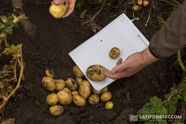 Проверяем качество нового урожая