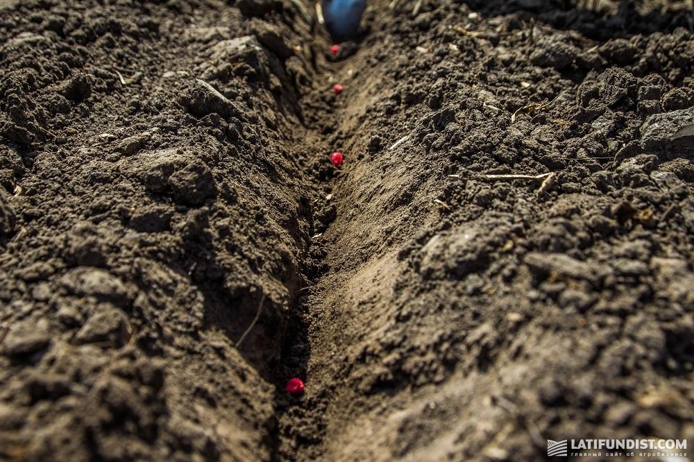 В «Калиновский Агрохим» направляют семена с высоким потенциалом урожайности