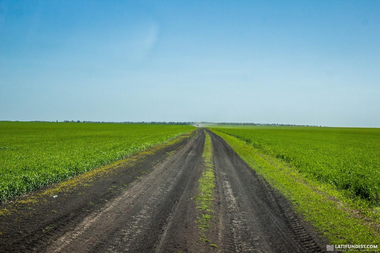 Поле озимой пшеницы предприятия «Колос»