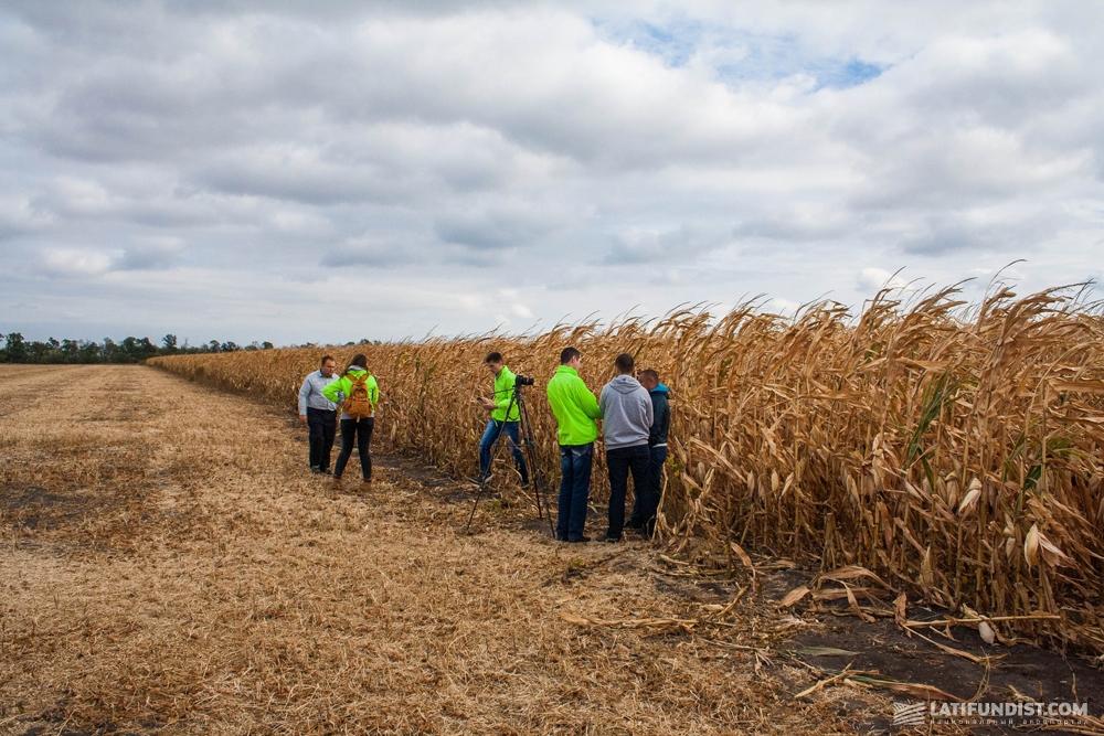 На кукурузном поле компании «АК Степанецкое»