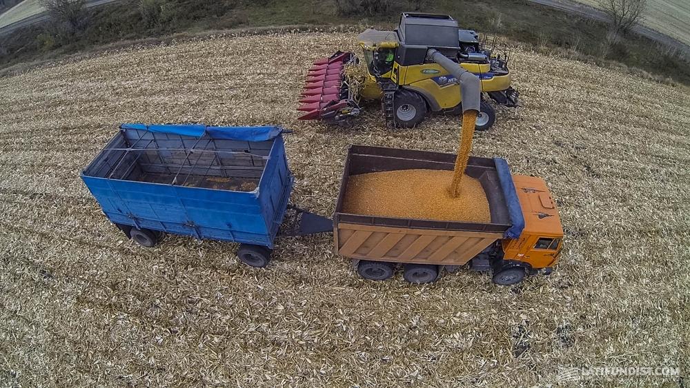 Выгрузка зерна в зерновоз на уборке урожая