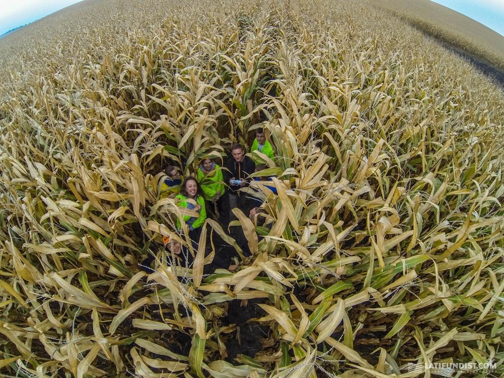 В полях кукурузы