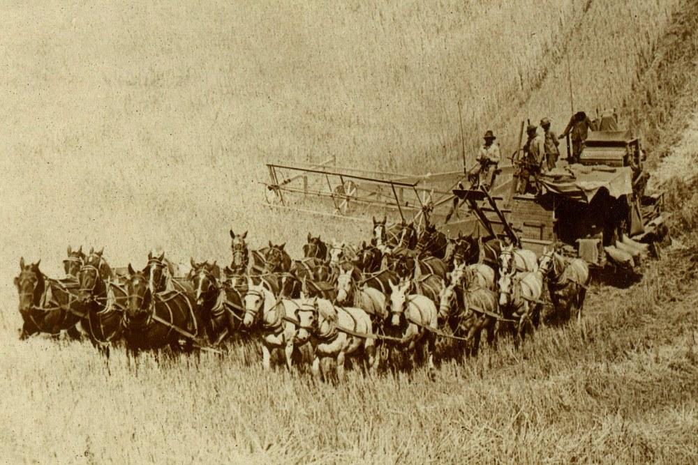 В некоторые из первых комбайнов приходилось запрягать до 40 лошадей