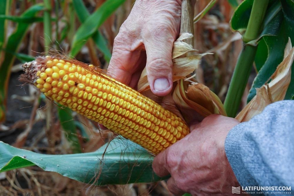Кукуруза «Лан-Агро»