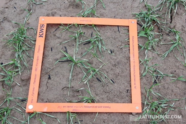 Подсчет растений на 1 квадратный метр