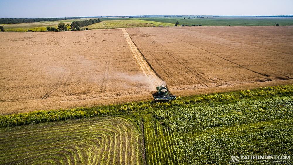 Уборка урожая на полях «Вега Агро»