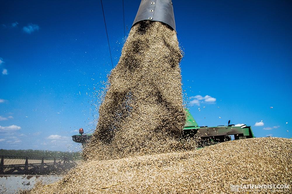 Зерно, собранное с полей «Вега Агро»
