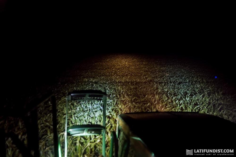 Ночная подкормка кукурузы