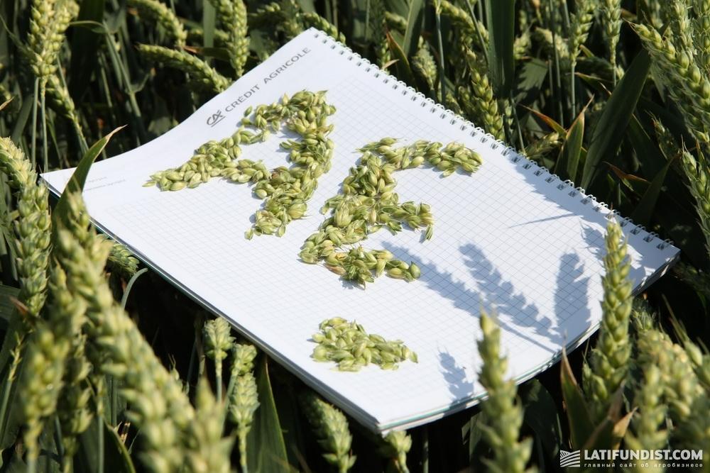 АгроЭкспедиция Пшеница 2018