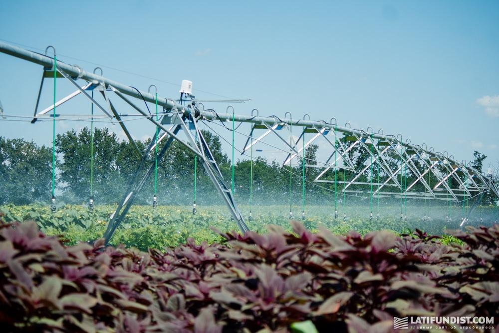 Сельское хозяйство «забирает» 69% всей пресной воды планеты, использует более 50% общей площади