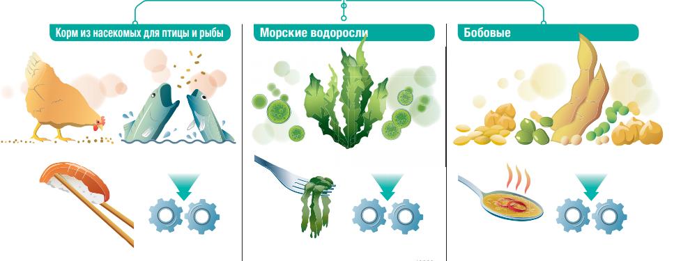Альтернативные белки