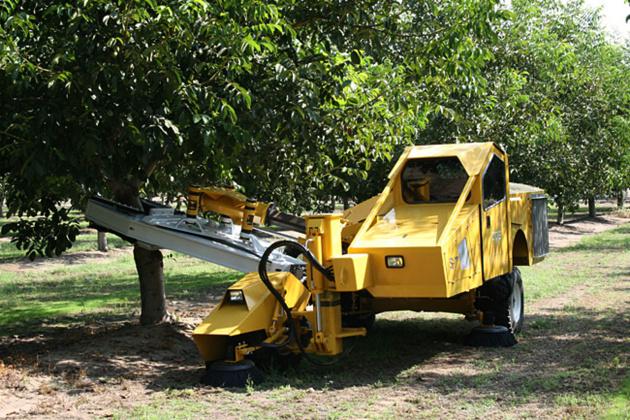 Финики и миндаль стряхивают с дерева с помощью специального комбайна