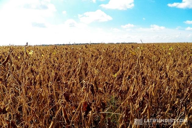Соевое поле