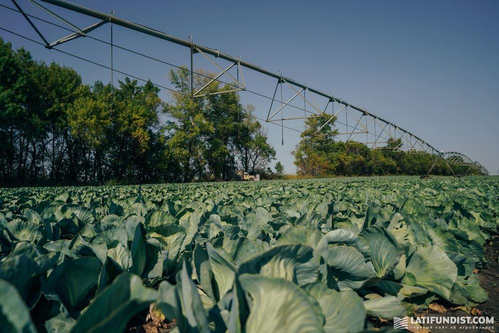Оросительная система на поле с капустой