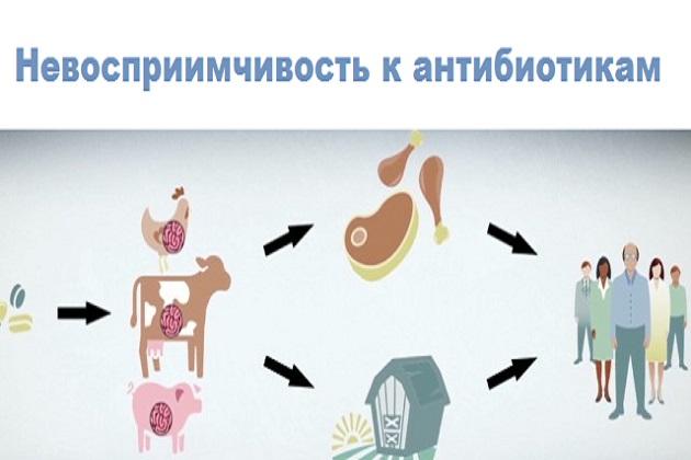 Невосприимчивость человека к антибиотикам