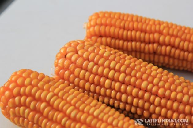 На нижних зернах наблюдались заметные микро-трещины