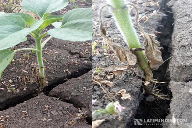 Наличие трещин в почве