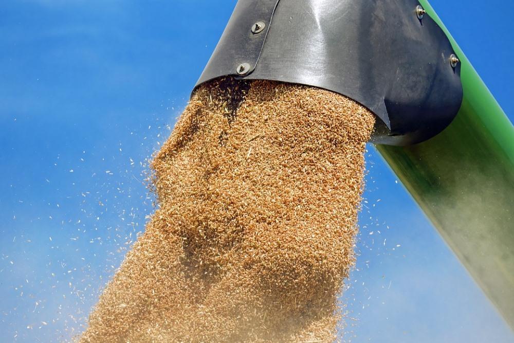 Погрузка пшеницы