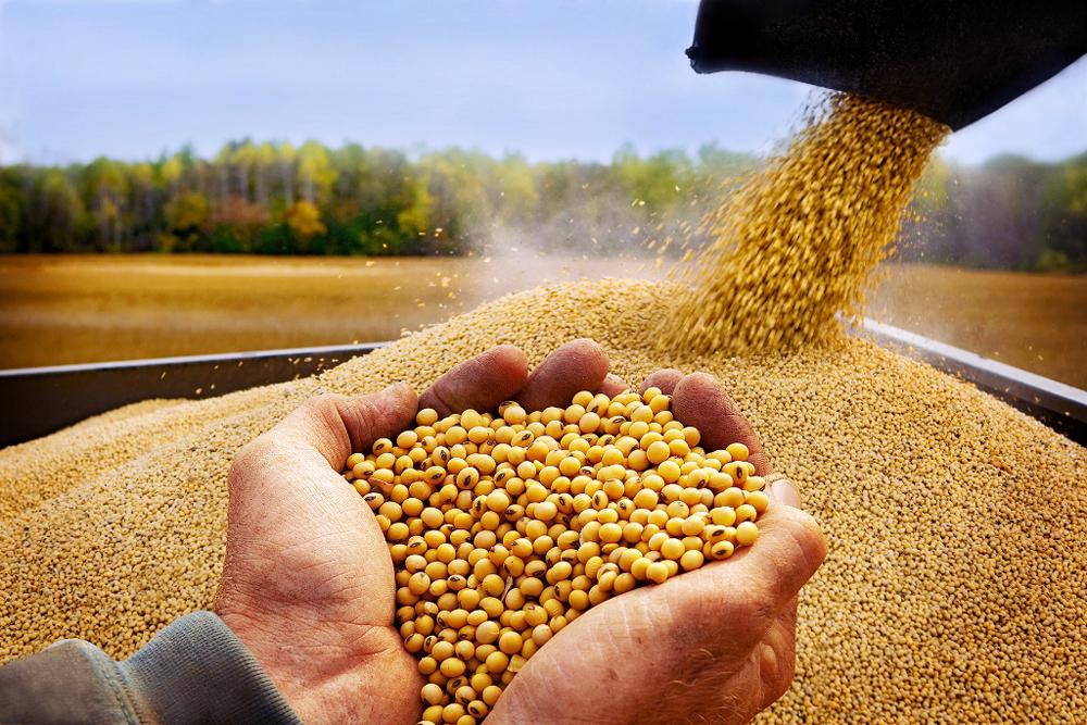 Сдерживанию цены на соевые бобы способствует не только хороший урожай этого года
