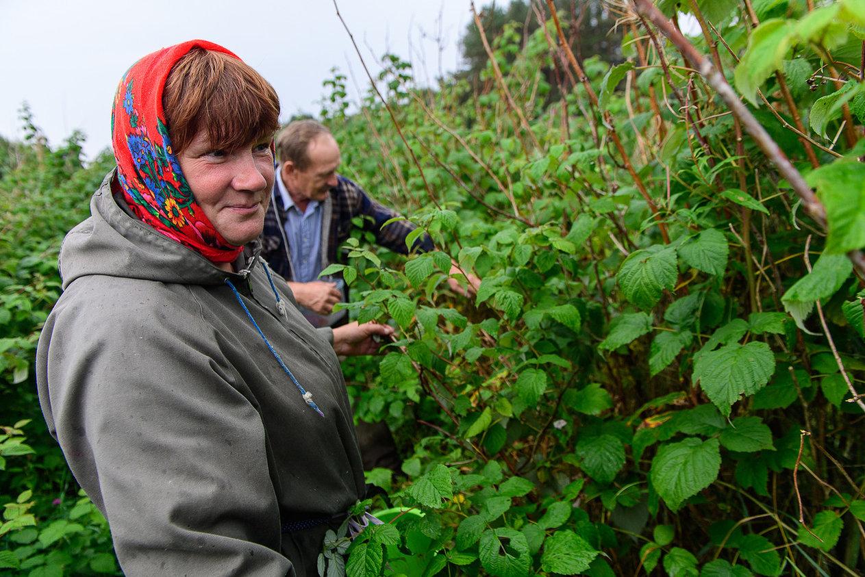 При поддержке компании создано 32 кооператива. Первым появился кооператив по выращиванию малины