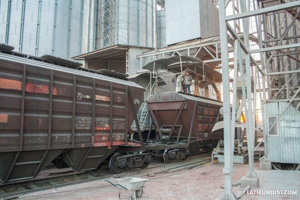 Процесс отгрузки зерна в зерновозы
