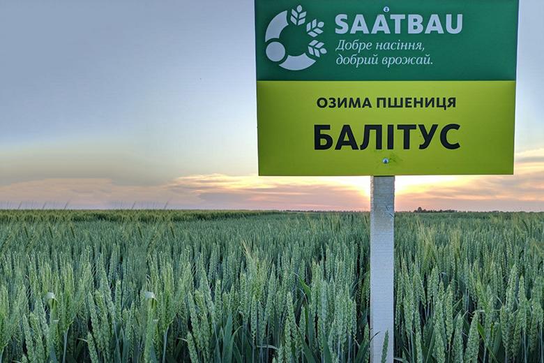 Раннеспелый сорт пшеницы БАЛИТУС