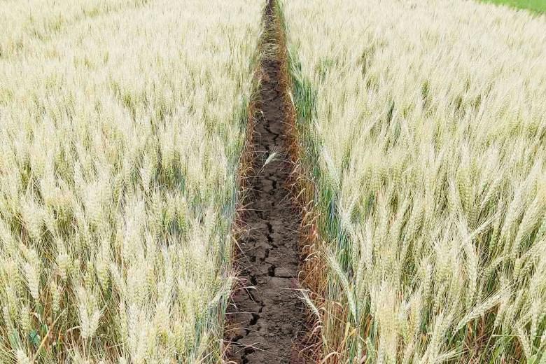 Засуха на Юге Украины