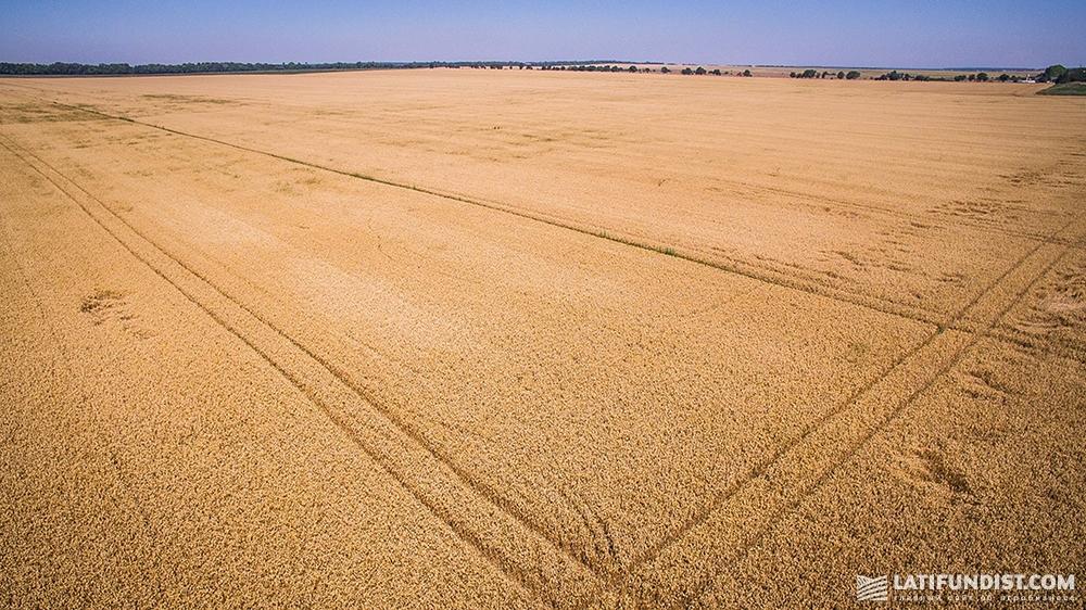 Агрохолдинги редко производят нишевые культуры