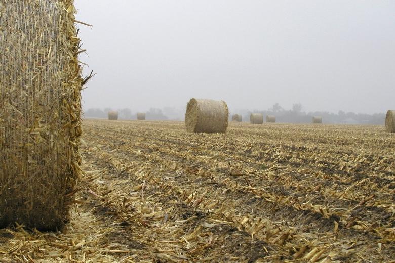 Отходы с полей — это ежегодно возобновляемый природный ресурс
