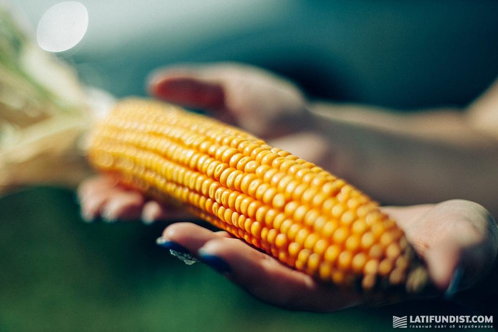 Возможно ли счастливое будущее для украинской кукурузы?