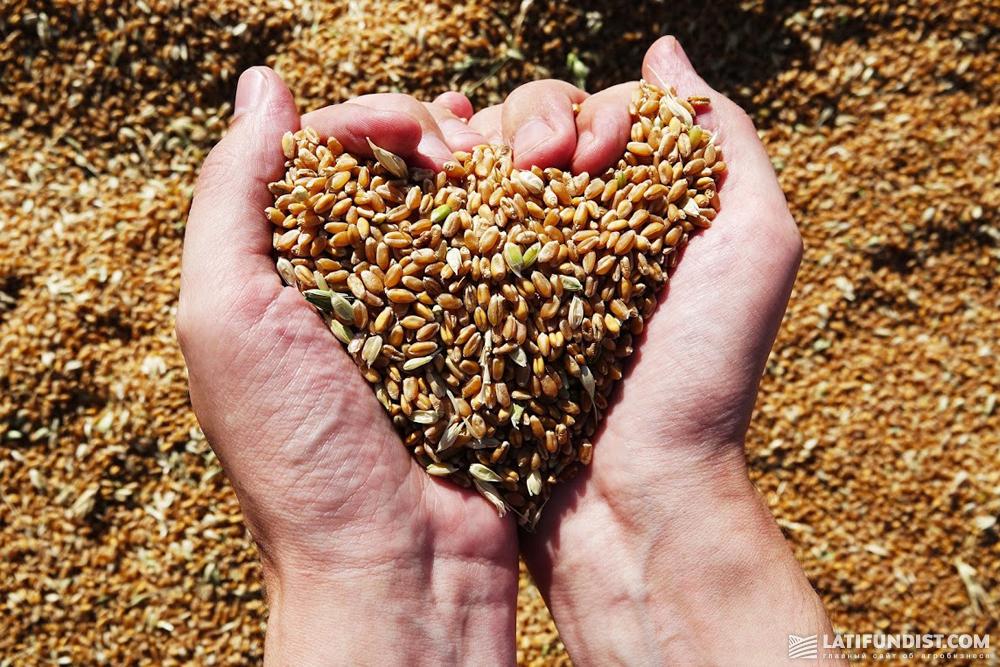 Мировое производство пшеницы в 2018 году прогнозируется на уровне около 728 млн тонн