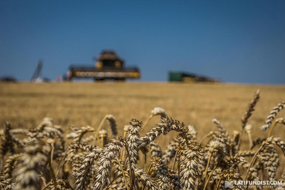 Последний отчет по экспорту зерновых из США выглядит не радужно