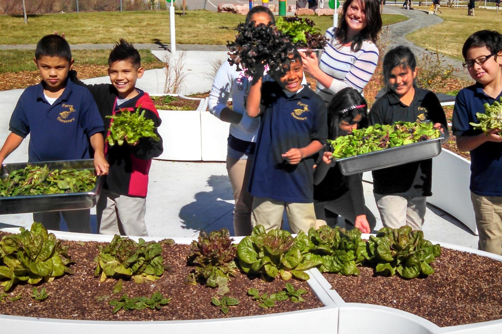 Learning Gardens - открытые классы по земледелию для школьников