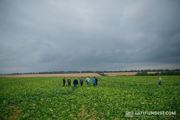 Поле агрофирмы «Украина-Браталив»