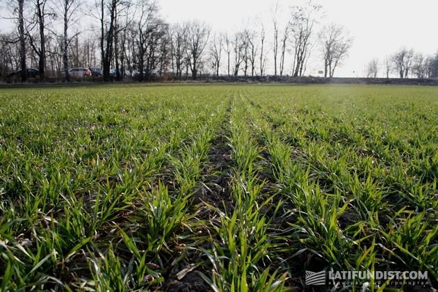 Отправляемся еще на одно поле агрохолдинга «Зернопродукт МХП Липовка»